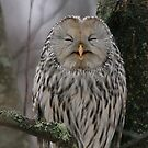 Laughing Owl by Remo Savisaar