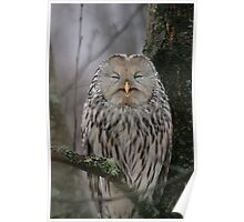 Laughing Owl Poster