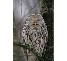 Laughing Owl Photographic Print