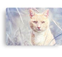 Red Tomcat Canvas Print