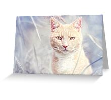 Red Tomcat Greeting Card