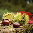 Autumn `Treasures by Southernlass