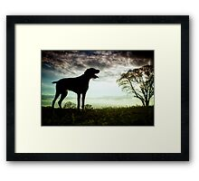 German Wirehaired Pointer Dog Framed Print