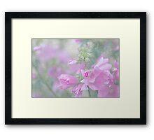 Odd Stemmed Wild Flower  Framed Print