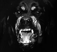 Rottweiler  by JedidiahUbaldo