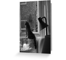 Cats. Watching & Waiting. It's what we do. Greeting Card