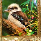 Kookaburra Christmas Card by Trudi's Images