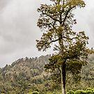 Seddonville Tree by Belinda Osgood