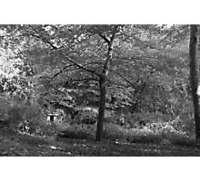 Black and white trees Photographic Print