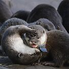 Otters with a new Toy by Dorothy Thomson