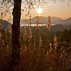 Wildflowers in the Glen by Roddy Atkinson