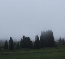 foggy drive. by Meg Subry