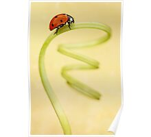 Ladybug on the green spring Poster