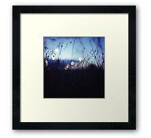 Long wild grass on summer evening twilight dusk blue bokeh square Hasselblad medium format film analog photo Framed Print