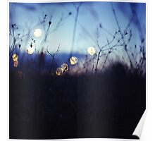 Long wild grass on summer evening twilight dusk blue bokeh square Hasselblad medium format film analog photo Poster