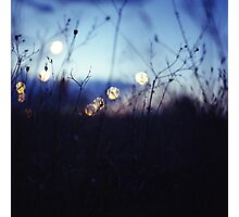 Long wild grass on summer evening twilight dusk blue bokeh square Hasselblad medium format film analog photo Photographic Print