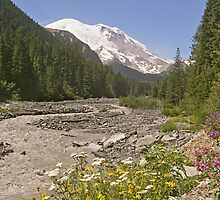 Mount Rainier from White River Campground Trail by Peter Sucy