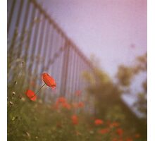Poppies growing up fence in hot summer faded vintage retro square Hasselblad medium format film analog photo Photographic Print