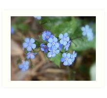 not forget-me-not Art Print