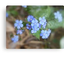 not forget-me-not Metal Print
