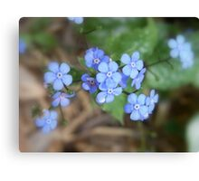not forget-me-not Canvas Print