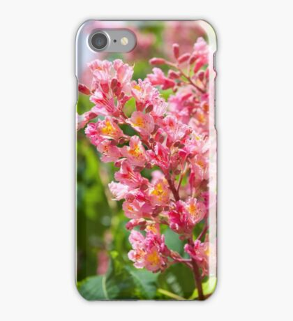 Aesculus red blossom cluster iPhone Case/Skin