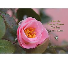 THE ROSE OF SHARON Photographic Print