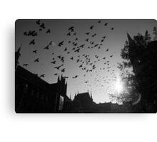 Pigeons flying over Torun city, Poland Canvas Print