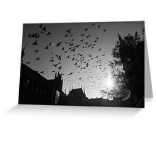 Pigeons flying over Torun city, Poland Greeting Card