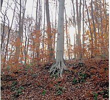 autumn gleam Photographic Print