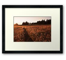 Glowing grass on Hurricane Hill, Olympic National Park Framed Print