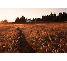 Glowing grass on Hurricane Hill, Olympic National Park Photographic Print