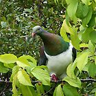 Native Wood Pigeon.......Kereru........! by Roy  Massicks