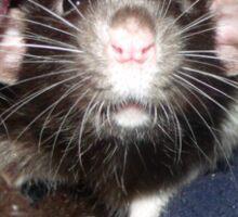 I get ratty without my coffee Sticker