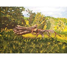 Log and Barbed Wire Photographic Print