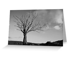 Petrified tree at Lumphanan Greeting Card