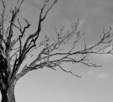 Petrified tree at Lumphanan Sticker