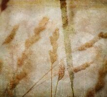 wild grasses 28 by vigor