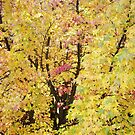 Autumn Forest Art prints Yellow Fall Leaves by BasleeArtPrints