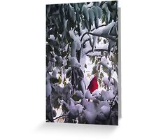 Cardinal in Holly Tree Greeting Card