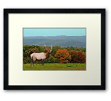 Bull Elk During Rut Framed Print