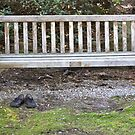 Empty Bench Empty Shoes  by RichImage