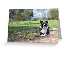 Alley... Beautiful Border Collie....  Greeting Card