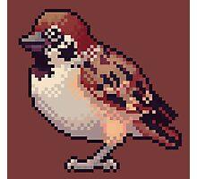 Pixel Sparrow Photographic Print