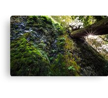 Moss and the Star Canvas Print