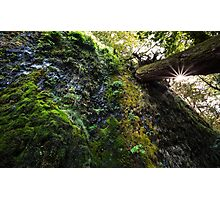 Moss and the Star Photographic Print