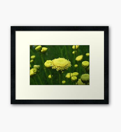 Proud and Tall Framed Print
