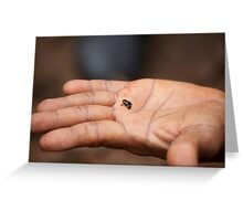 Cuba: The tiny, tiny Monte Iberia eleuth frog Greeting Card