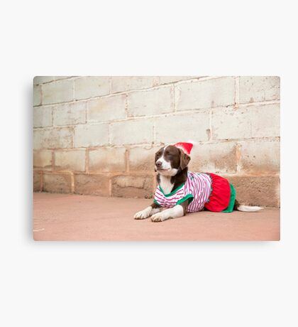 Bindy... Dressed Up For Xmas..... Canvas Print