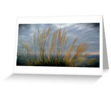 Pampas grass,Cornwall UK. Greeting Card